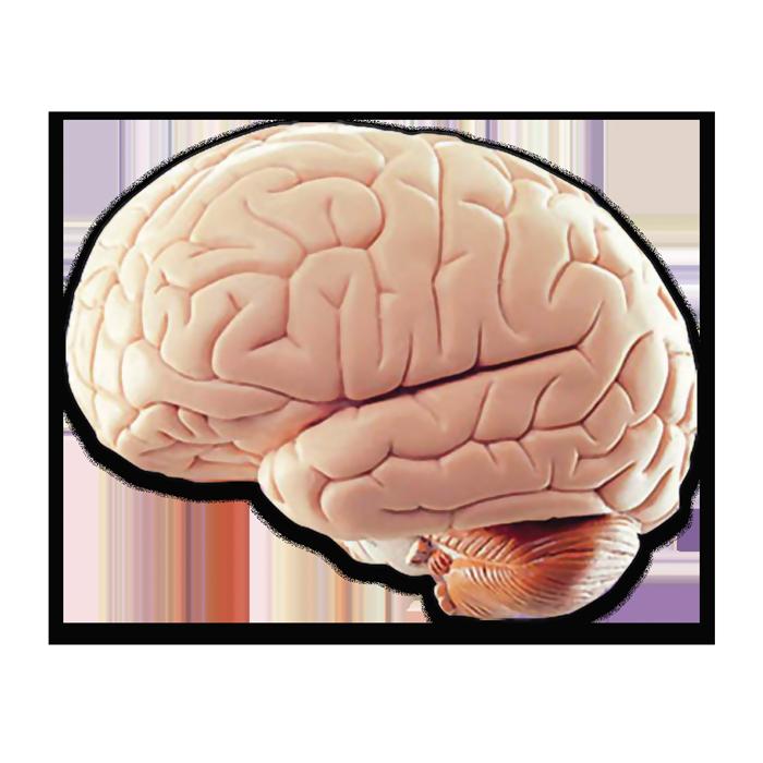Dementia vs Alzheimer's, Alzheimer's or Dementia